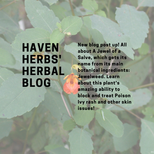 A Jewel of a Salve: The power of Jewelweed