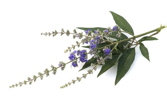 Herb Profile: Vitex (Chaste Berry)