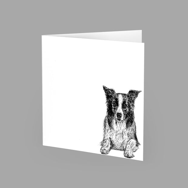 BORDER COLLIE - GREETING CARD 15cm x 15cm (BLANK INSIDE) - doggily