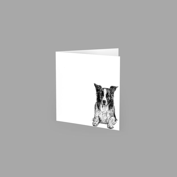 BORDER COLLIE - GREETING CARD 10cm x 10cm (BLANK INSIDE) - doggily