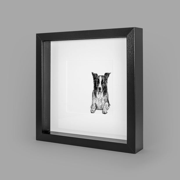 BORDER COLLIE BOX-FRAMED PRINT - BLACK - 23x23CM - doggily