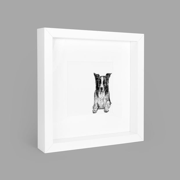 BORDER COLLIE BOX-FRAMED PRINT - WHITE - 23x23CM - doggily