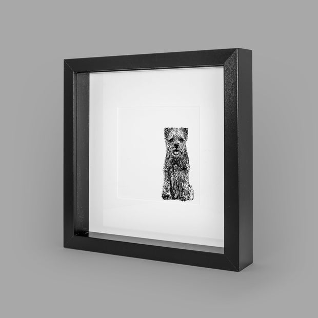 BORDER TERRIER BOX-FRAMED PRINT - BLACK - 23x23CM - doggily