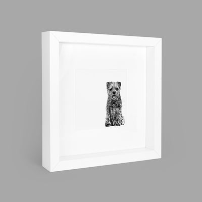 BORDER TERRIER BOX-FRAMED PRINT - WHITE - 23x23CM - doggily