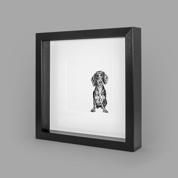 DACHSHUND BOX-FRAMED PRINT - BLACK - 23x23CM - doggily