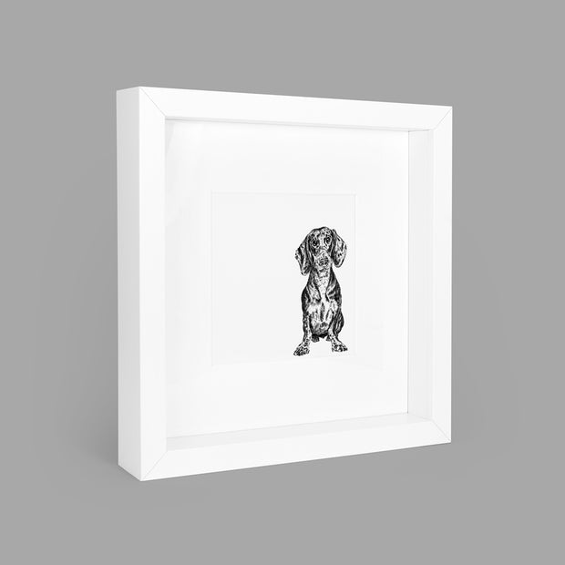 DACHSHUND BOX-FRAMED PRINT - WHITE - 23x23CM - doggily