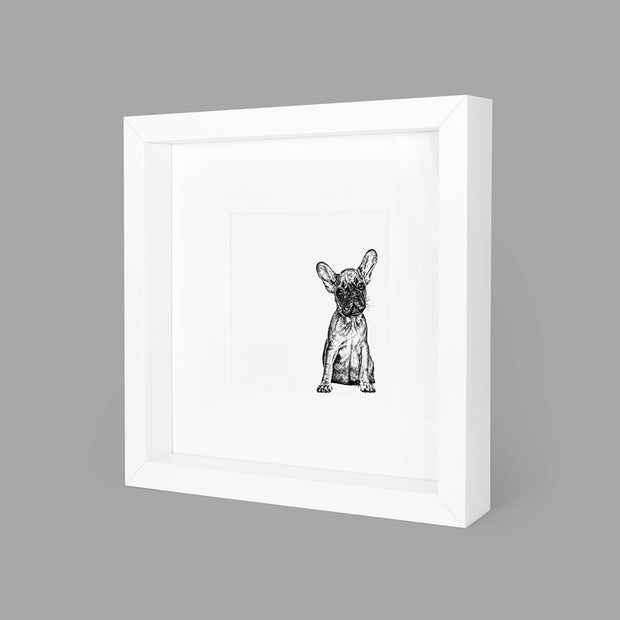 FRENCH BULLDOG BOX-FRAMED PRINT - WHITE - 23x23CM - doggily