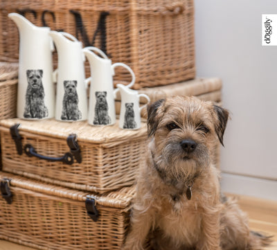 BORDER TERRIER - SMALL JUG (11cm HIGH) - doggily