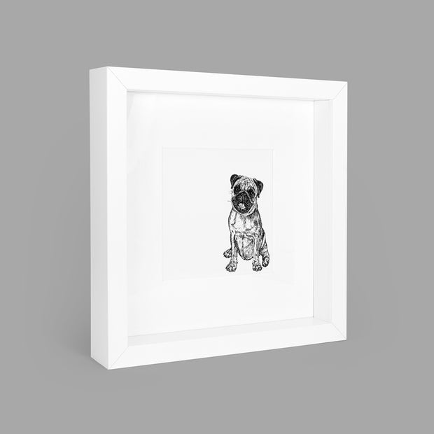 PUG BOX-FRAMED PRINT - WHITE - 23x23CM - doggily