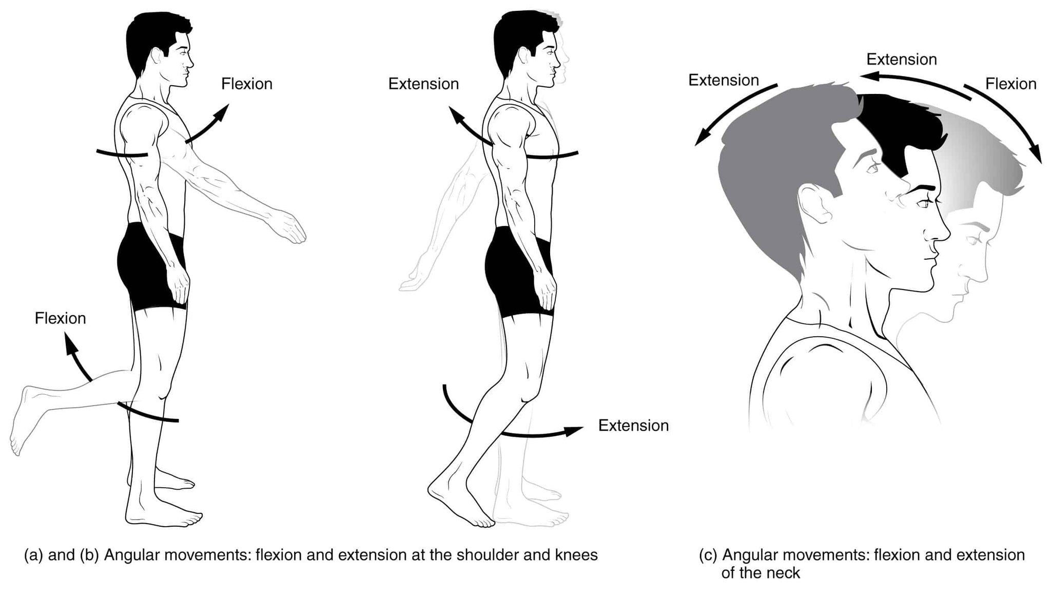 Hair Loss Through Forward Head Posture