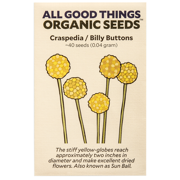 All Good Things Organic Seeds Craspedia/Billy Buttons