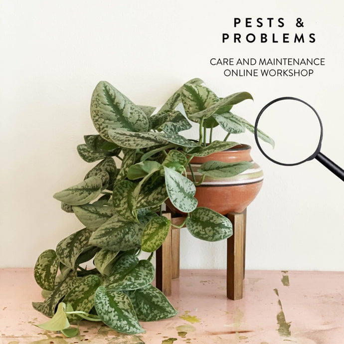 The Golden Garden Plant Pest and problems Online Workshop
