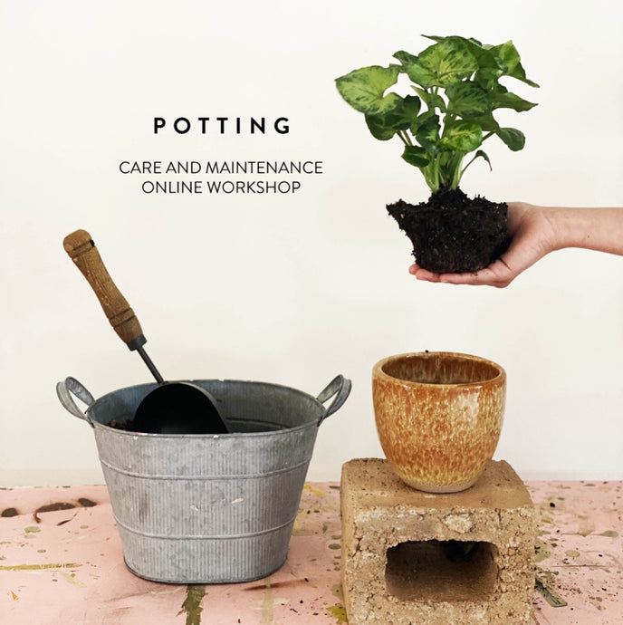 Planting and Potting: Online Workshop