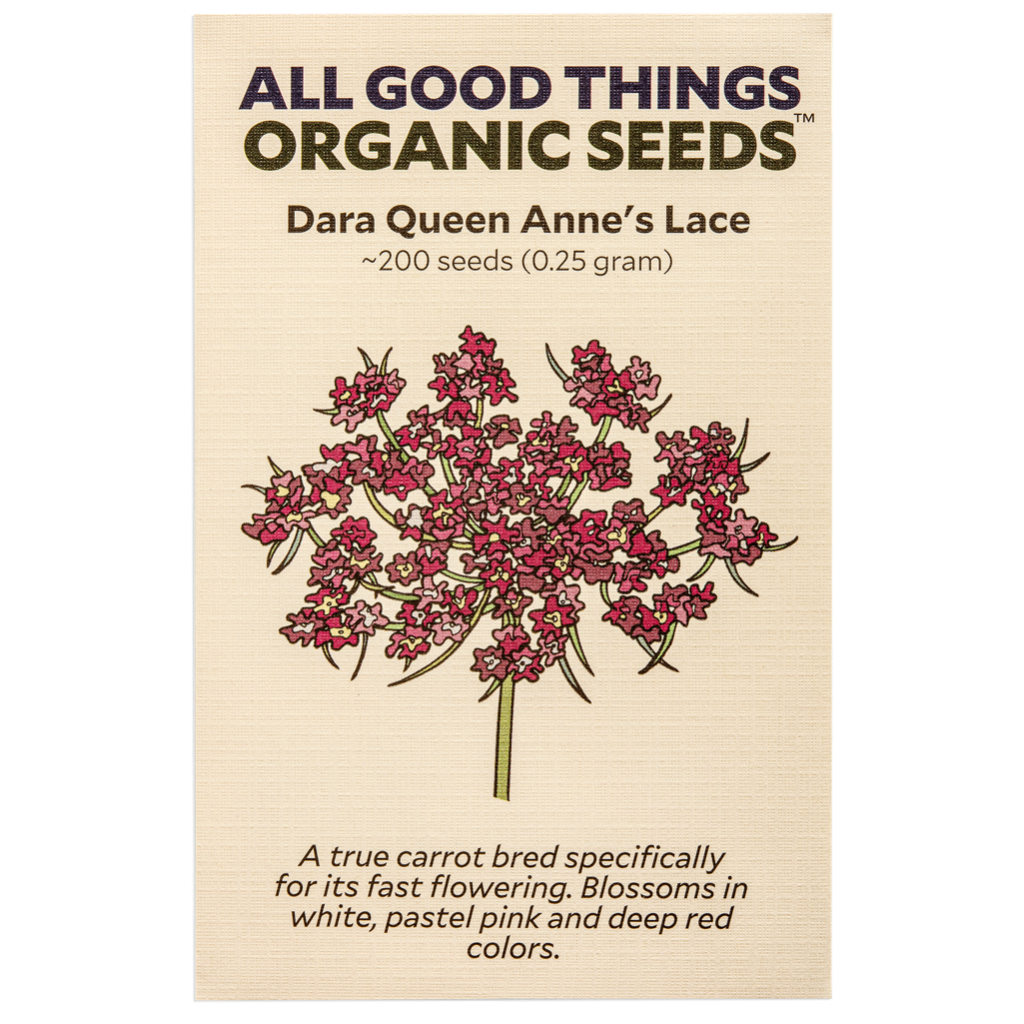 All Good Things Organic Seeds Dara Queen Anne's lace