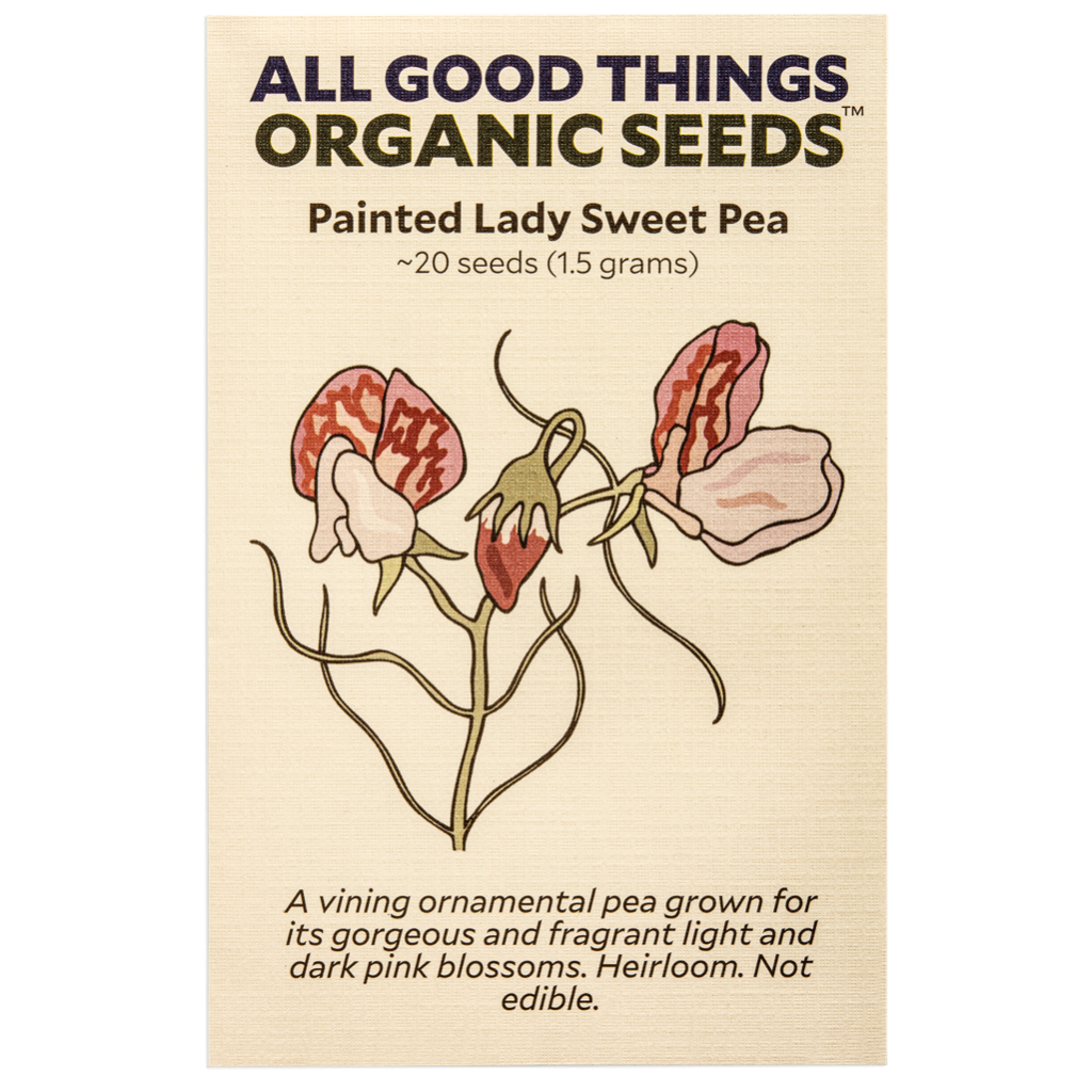All Good Things Organic Seeds Painted Lady Sweet Pea