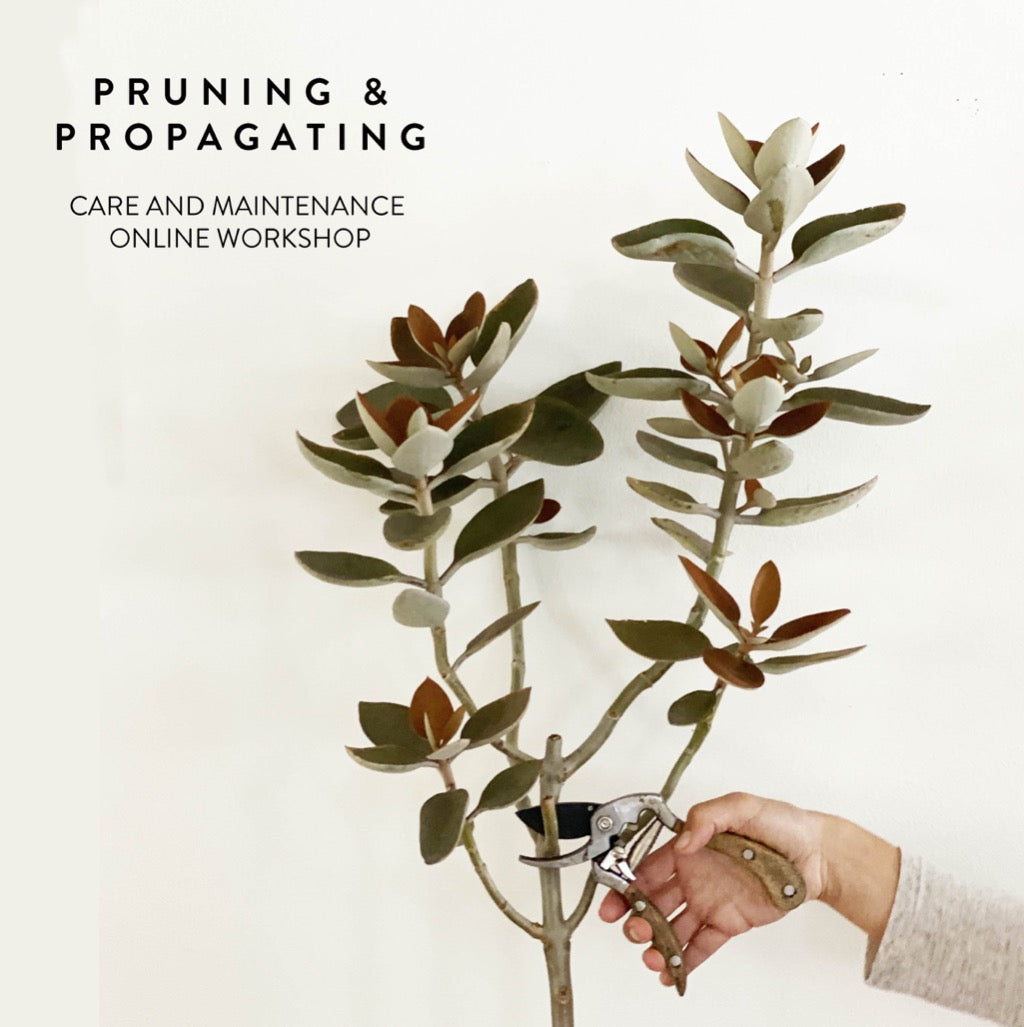 Golden Garden pruning and propagating online class workshop