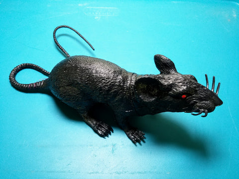 Large Black Rat Geocache