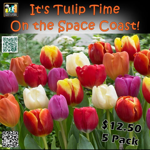 Tulip Evolution Munzee Stickers