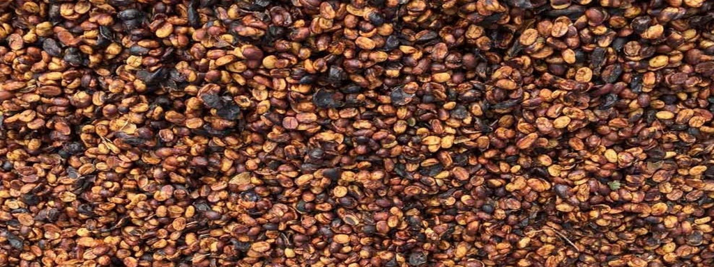 BLACK HONEY COFFEE      -  what is it and why do we love it?