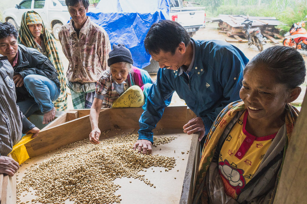 SULAWESI COFFEE PRODUCERS DRYING