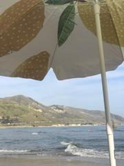 Business & Pleasure - Family Beach Umbrella - Lemons - Boatshed 7 The Original Beach Co.