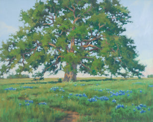 Bluebonnets and Live Oak