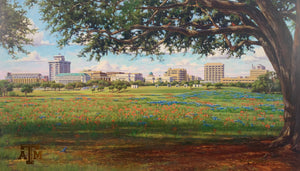 Texas A&M Campus View