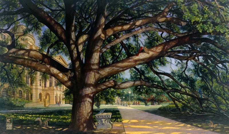 Texas A&M University - Century Tree Color - Print - Benjamin Knox Fine Art Gallery