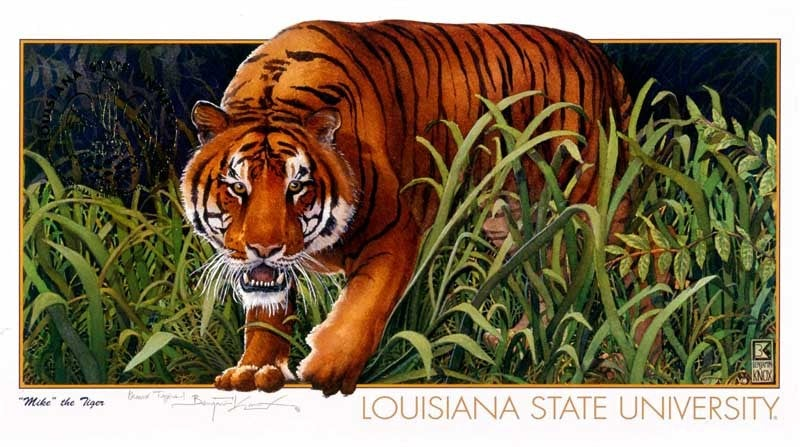 LSU Mike the Tiger - Louisiana State University - Print - Benjamin Knox Fine Art Gallery