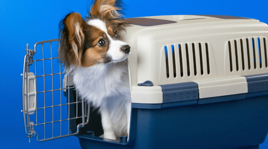 9 Training Hacks to Get Your Dog to Love His Modern Dog Crate