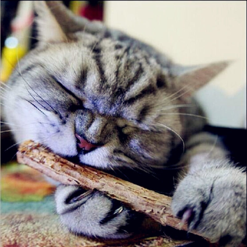 Catnip tooth cleaning sticks