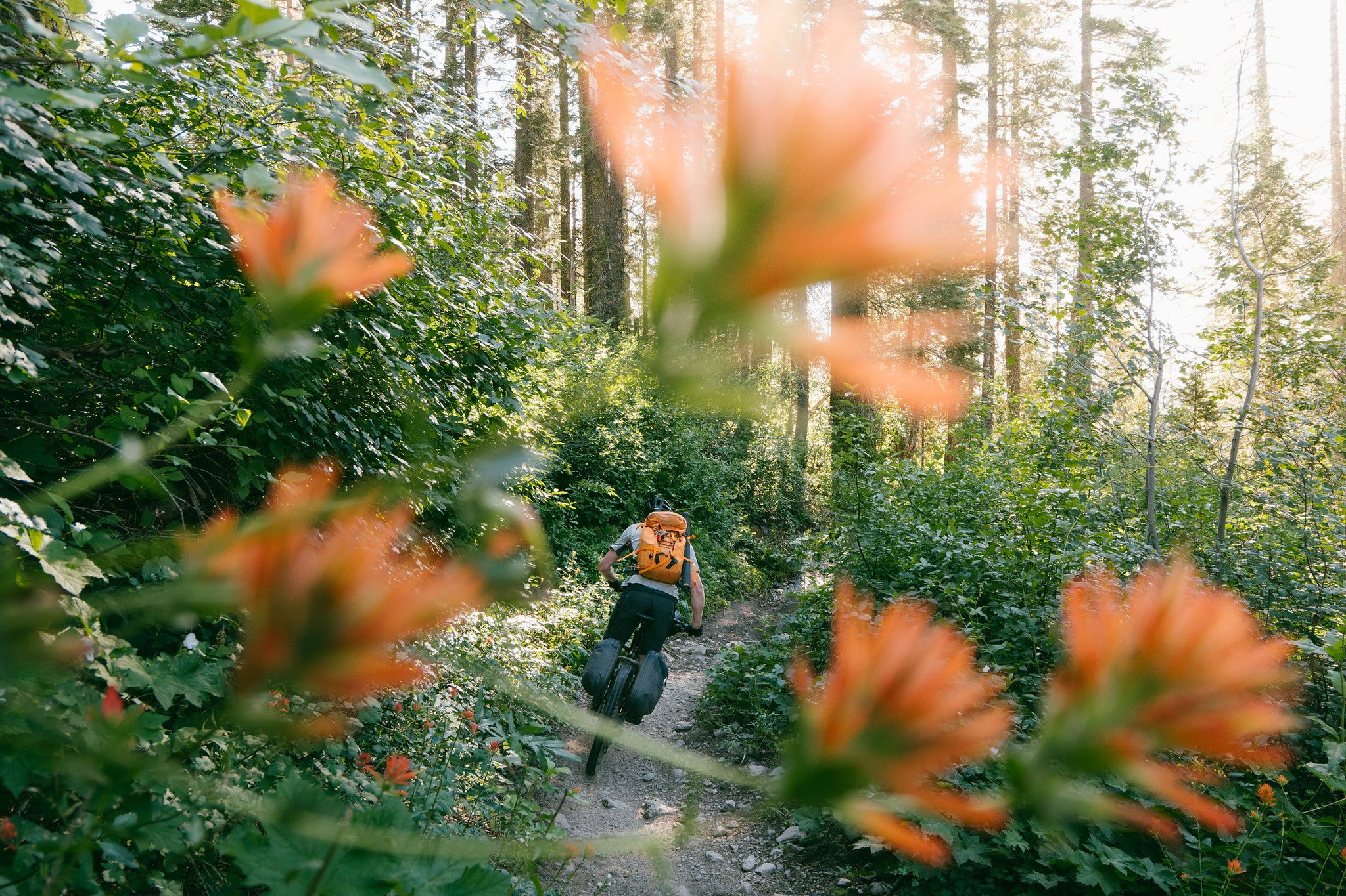 Mountain Biker with Castilleja Flowers in the Foreground