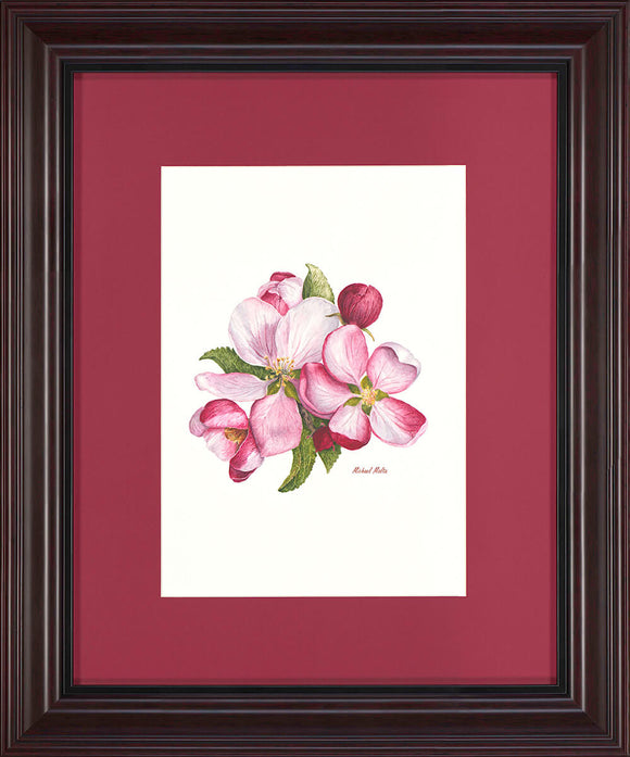 Apple Blossoms - Original