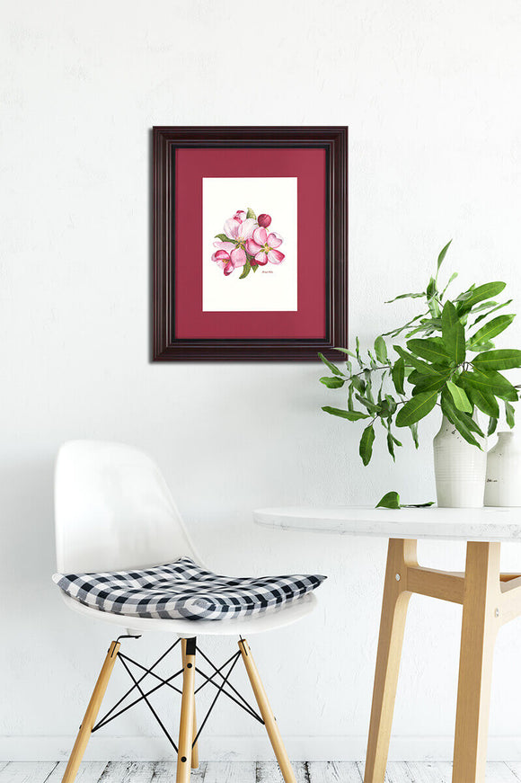 Apple Blossoms - Framed Prints