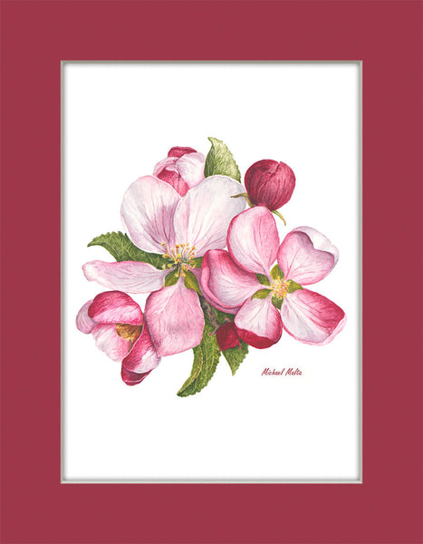 Apple Blossoms - Matted Prints