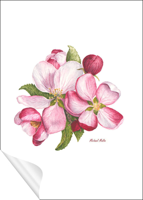 Apple Blossoms - Paper Prints