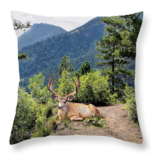 Taking A Break - Throw Pillow