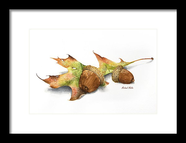 Autumn Oak And Acorns - Framed Print