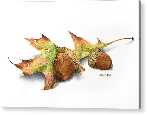 Autumn Oak And Acorns - Acrylic Print