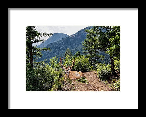 Taking A Break - Framed Print