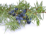 Organic Juniper Berry Oil - Angel-Cosmoceuticals