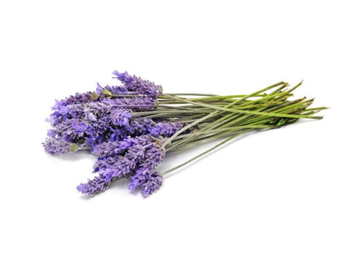 Lavender Bulgarian Oil - Angel-Cosmoceuticals