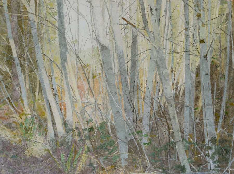 """Alders in Sunlight"""