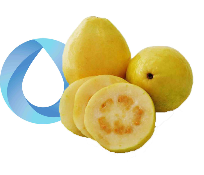 yellow guava transparent final