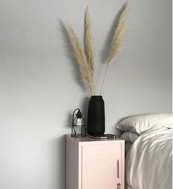 Let's talk about Pampas Grass