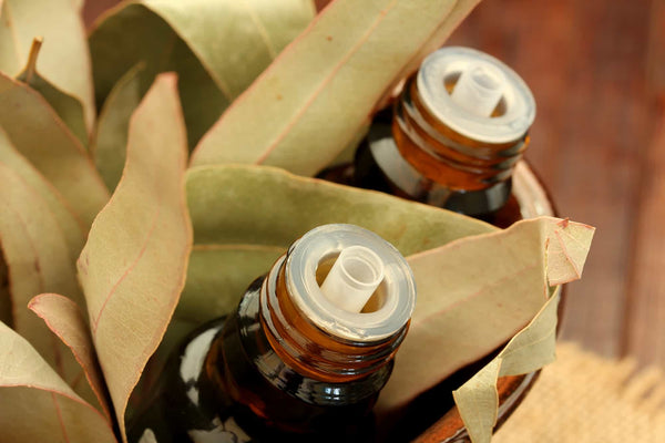 Eucalyptus Oil Benefits & Uses