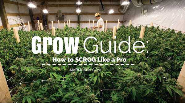 Grow Guide 101 for Beginners
