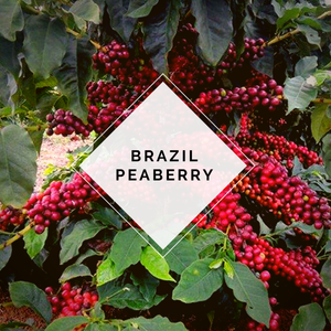 Brazilian Peaberry