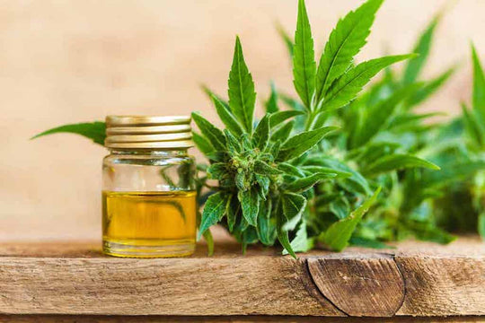 12 Of The Best CBD Massage Oils You Should Try