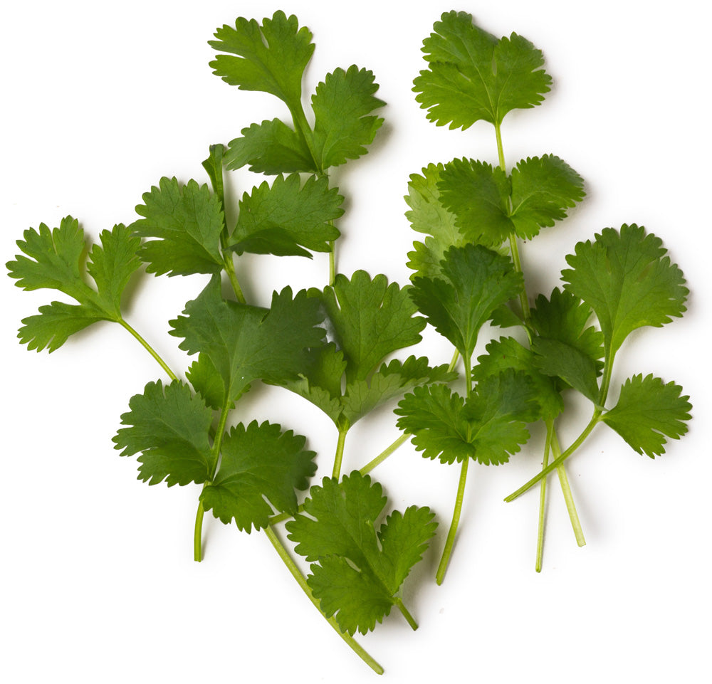 Fresh Coriander and Fair Trade Organic Clove Extract